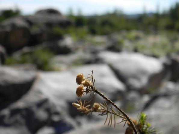 Nikon_2011_111